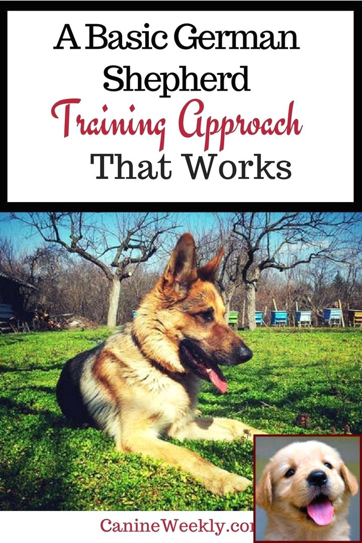 Dog Behavior Rehabilitation And Dog Training Classes Seattle
