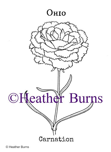 Ohio State Flower Carnation Carnations Coloring Books Flower