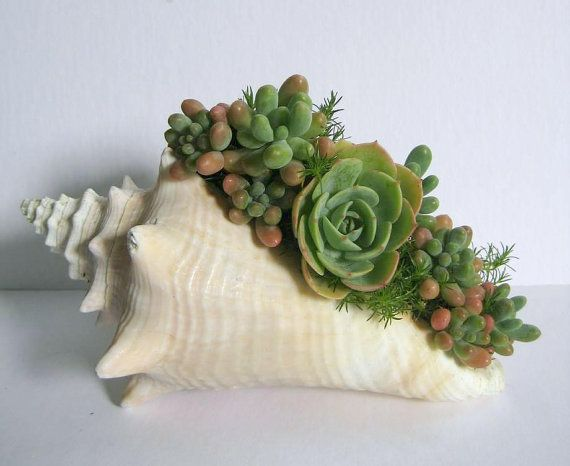 Seashell Planter Succulent Planter Beach Decor Real by rosekraft I never thought of something like this.