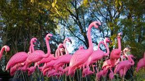 pink swans kitsch ile ilgili görsel sonucu