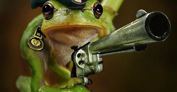Funny Frog Wallpaper Funny Biological Weapons Cute Pinterest - Frog wearing two snails as hat becomes star of hilarious photoshop battle