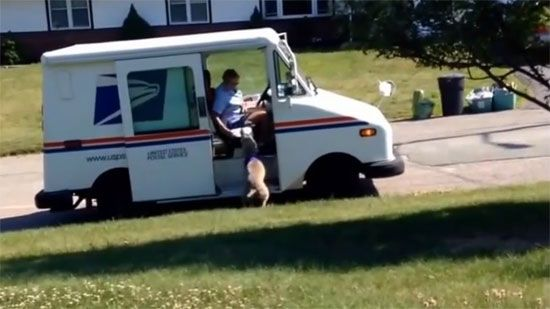 Video: Dog Waits For The Mail Lady - A Funny Video on KillSomeTime