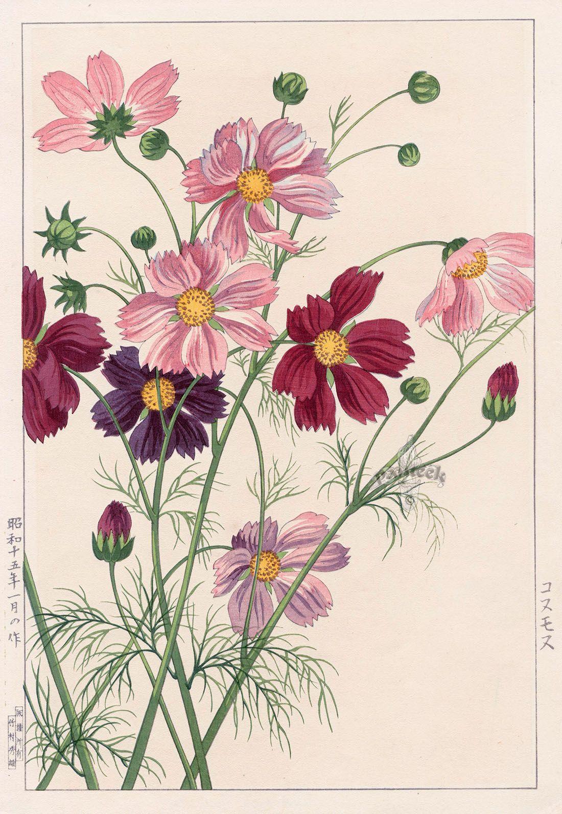 Cosmos By Nishimura Hodo From Shodo Kawarazaki Spring Flower Japanese Woodblock Prints Flower Art Botanical Prints Flower Illustration