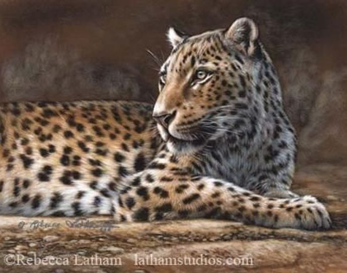 Leopard by Rebecca Latham