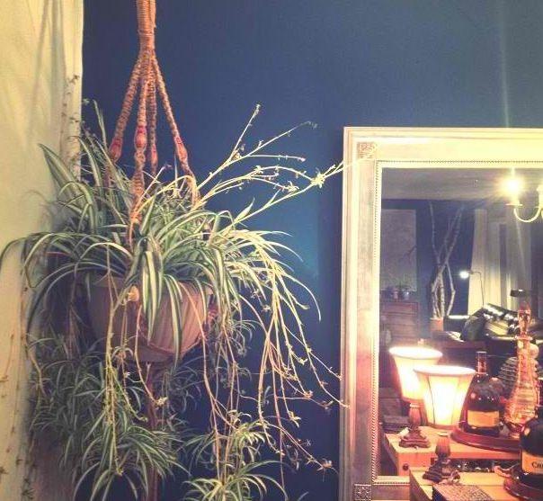 A little 70's Macramé plant hanger Spider plant Dining Room