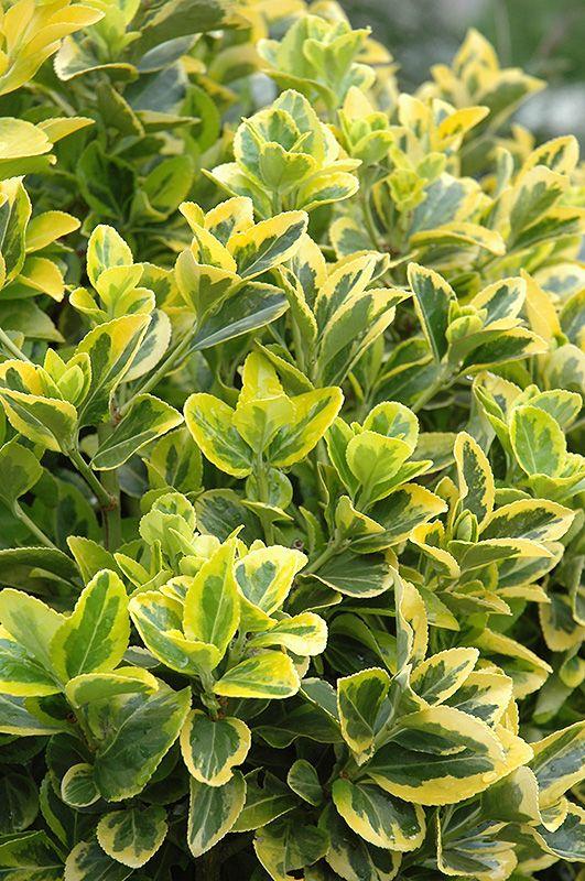 Find Plants Shade Shrubs