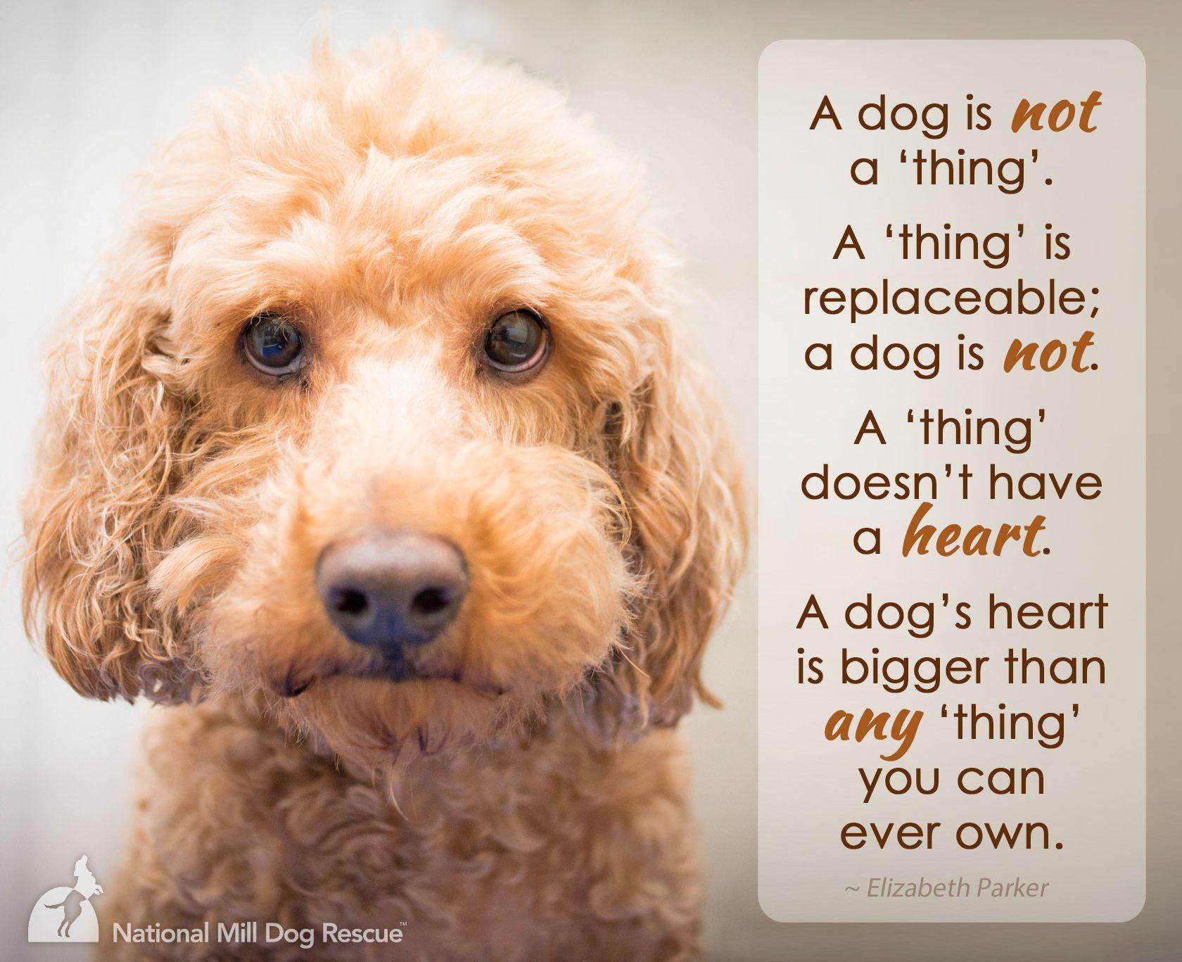 best 25 puppy mill rescue ideas on pinterest puppy mill report