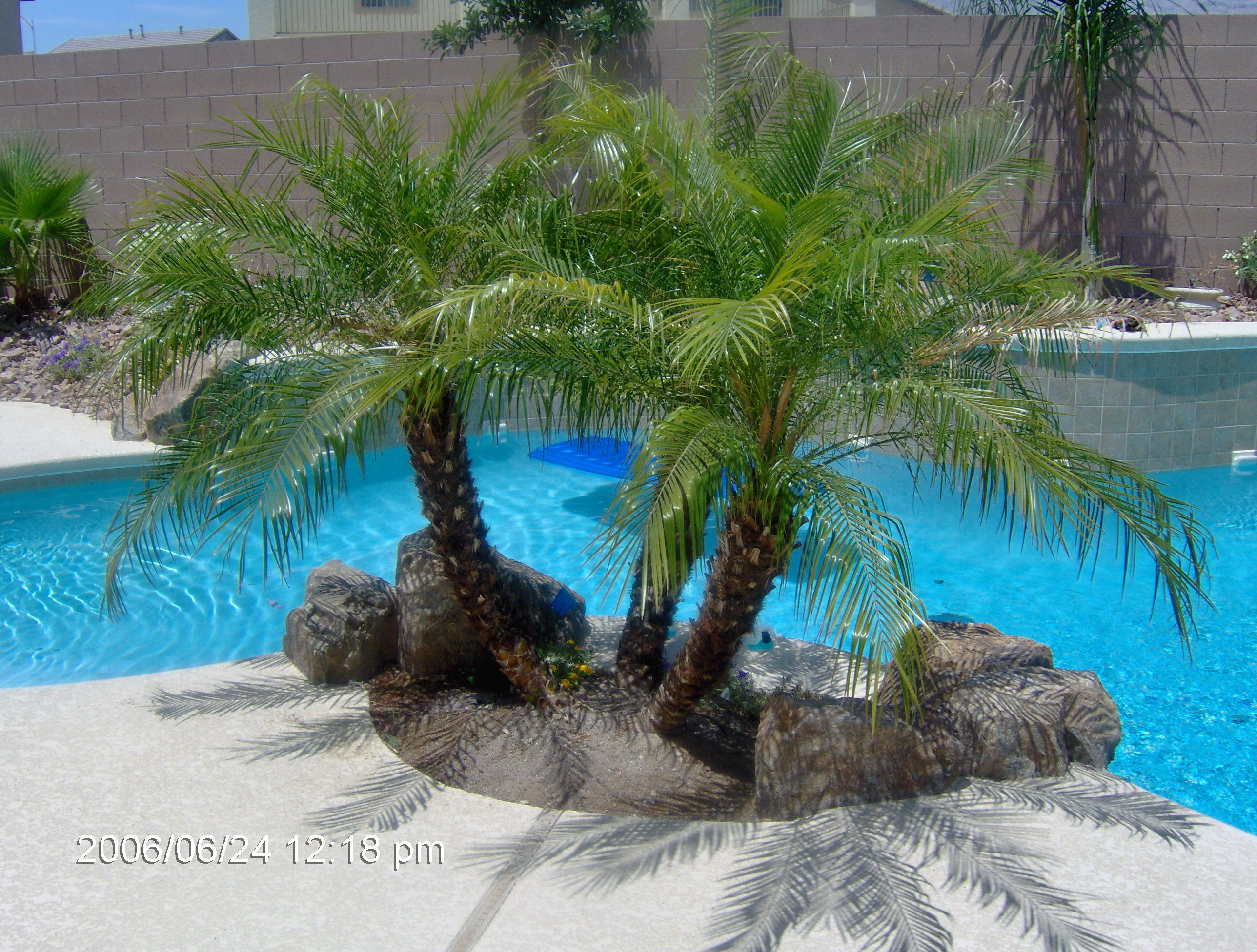 Small Palm Trees For The Pool Backyard Trees Palm Trees Landscaping Backyard Trees Landscaping