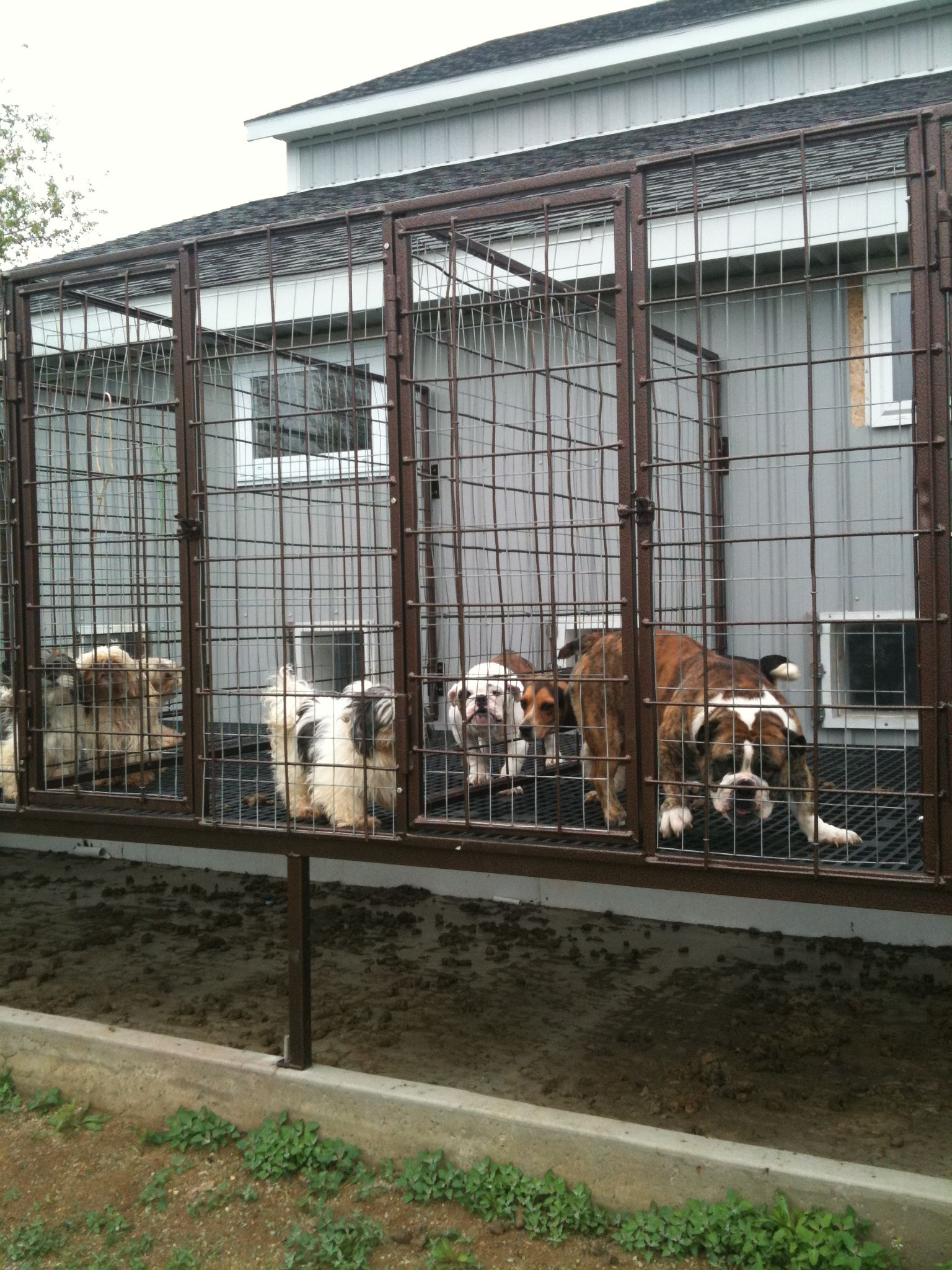 Indiana Amish Mill Puppy Mills Buy Puppies Puppies