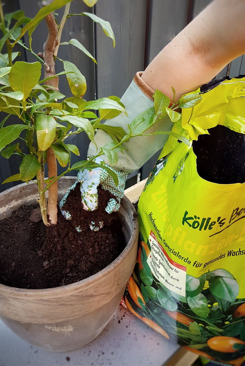 Eintopfen Und Umtopfen So Sind Pflanzen Gut Versorgt Garten