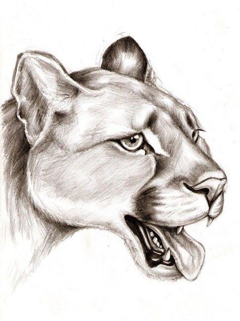 Animal Shading : animal, shading, Real., Shaded, Lines, Pencil, Drawings, Animals,, Animal, Drawings,, Animals