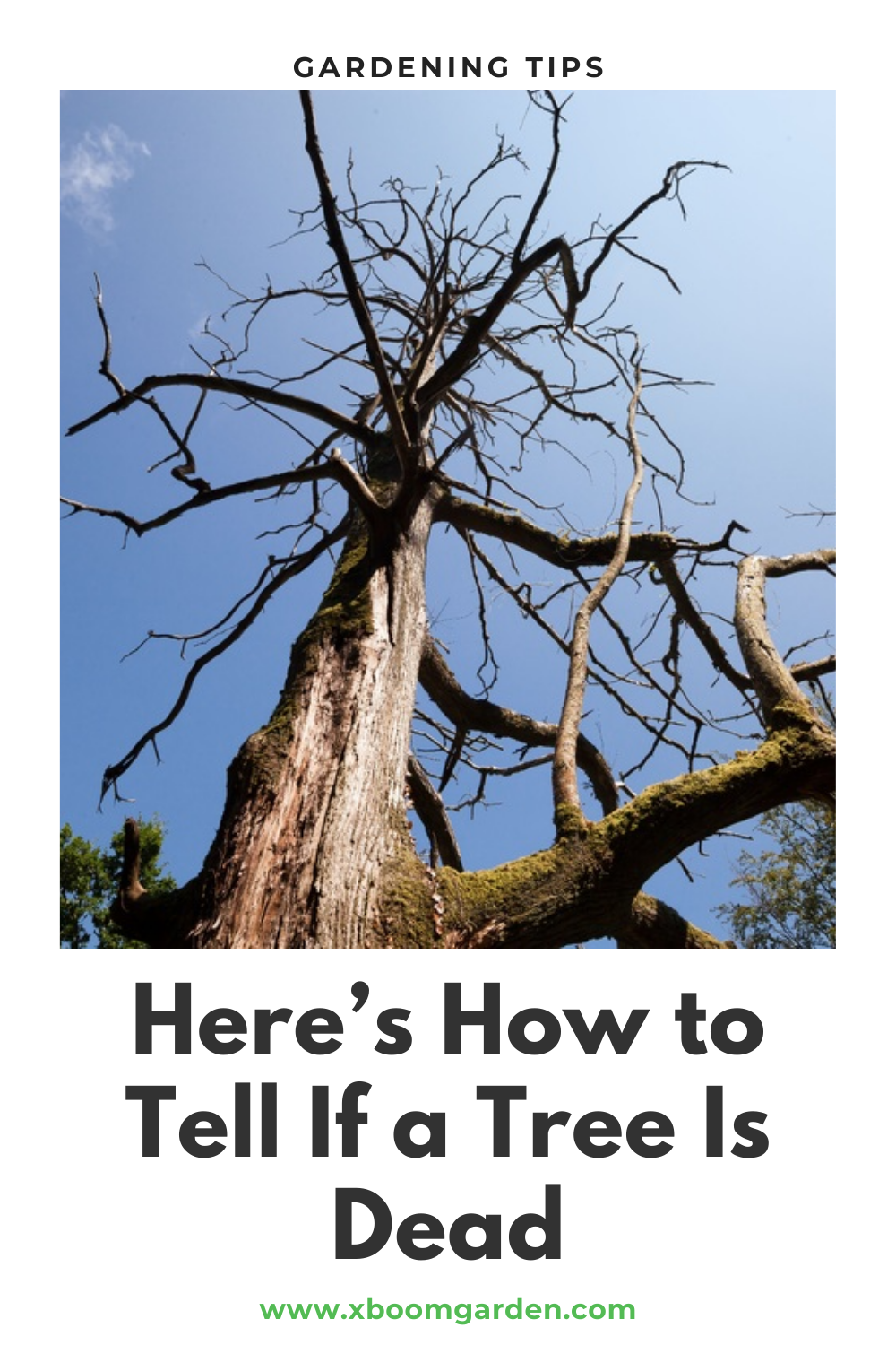 Here S How To Tell If A Tree Is Dead Tree Garden Trees Yard Work