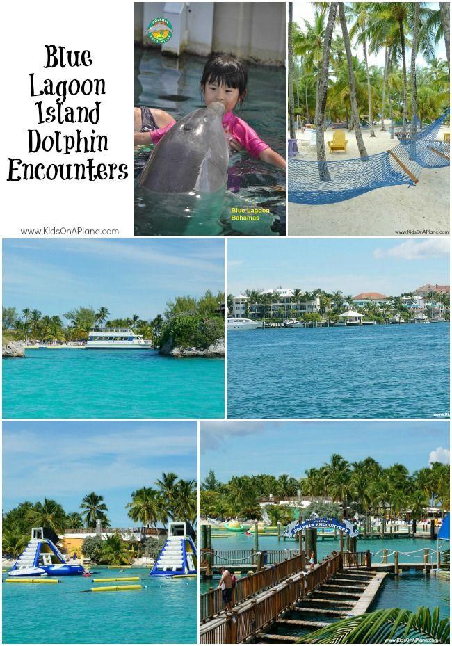 Dolphins At Blue Lagoon Island Blue Lagoon Island Bahamas