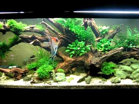 the easy freshwater aquarium guide fish tanks pinterest
