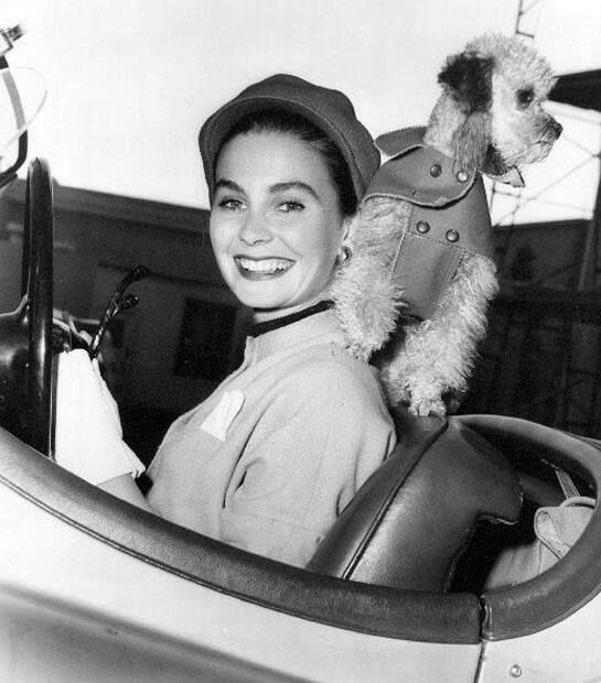 Jean Simmons and her Poodle friend in 1953