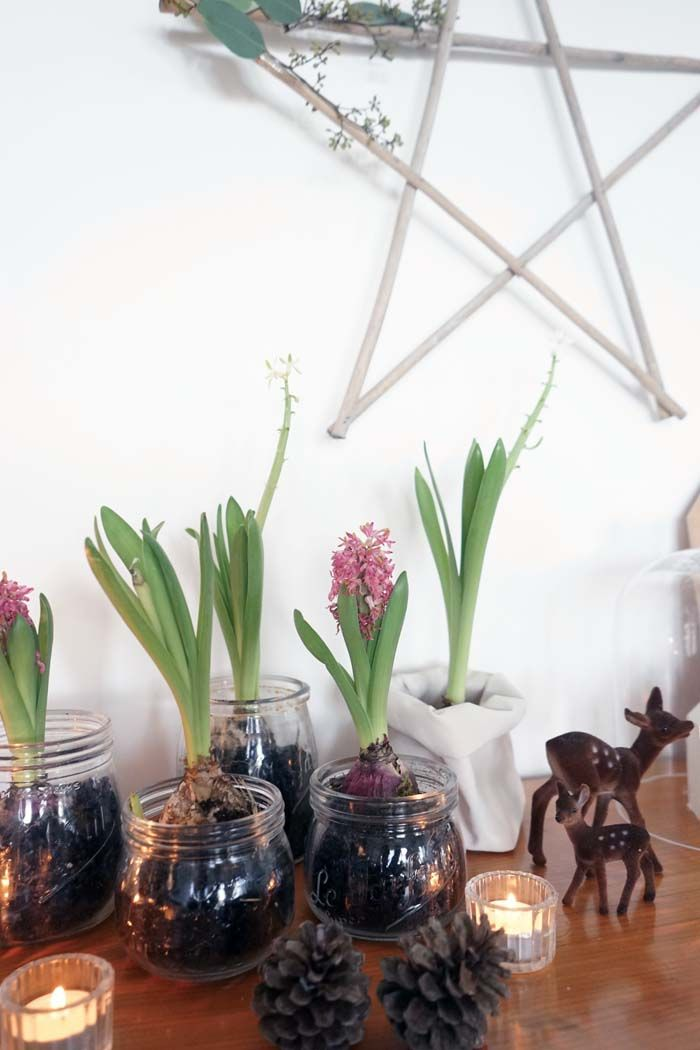 bocaux jacinthe ma d co de no l v g tale at home. Black Bedroom Furniture Sets. Home Design Ideas
