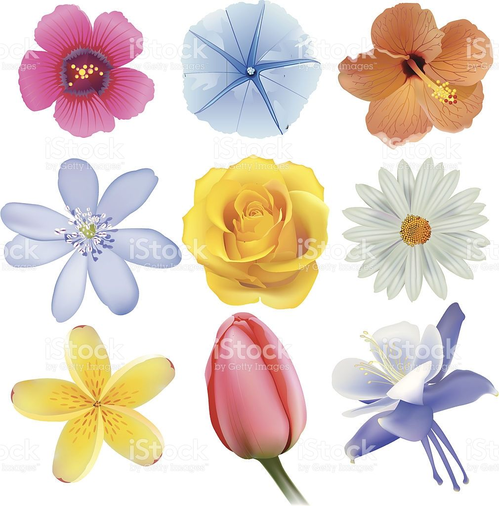Types of flowers types of flowers a z common types of for Kinds of flowers with name and picture
