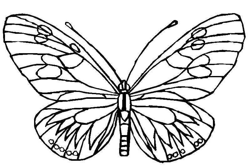 Coloring Page Butterflies Butterfly Coloring Page Animal Coloring Pages Free Disney Coloring Pages