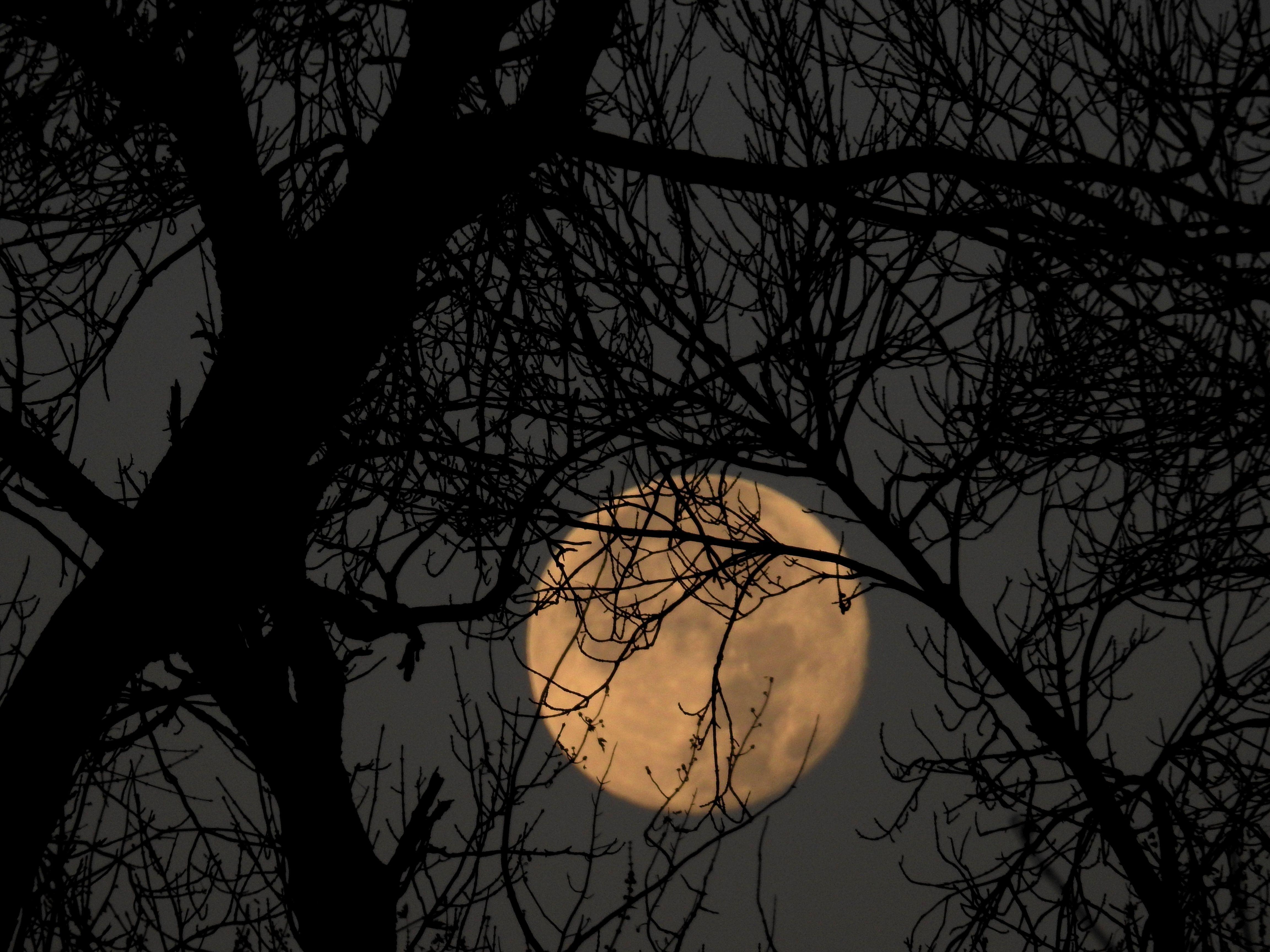 Super Moon Nov 14 2016 by Ken Groezinger