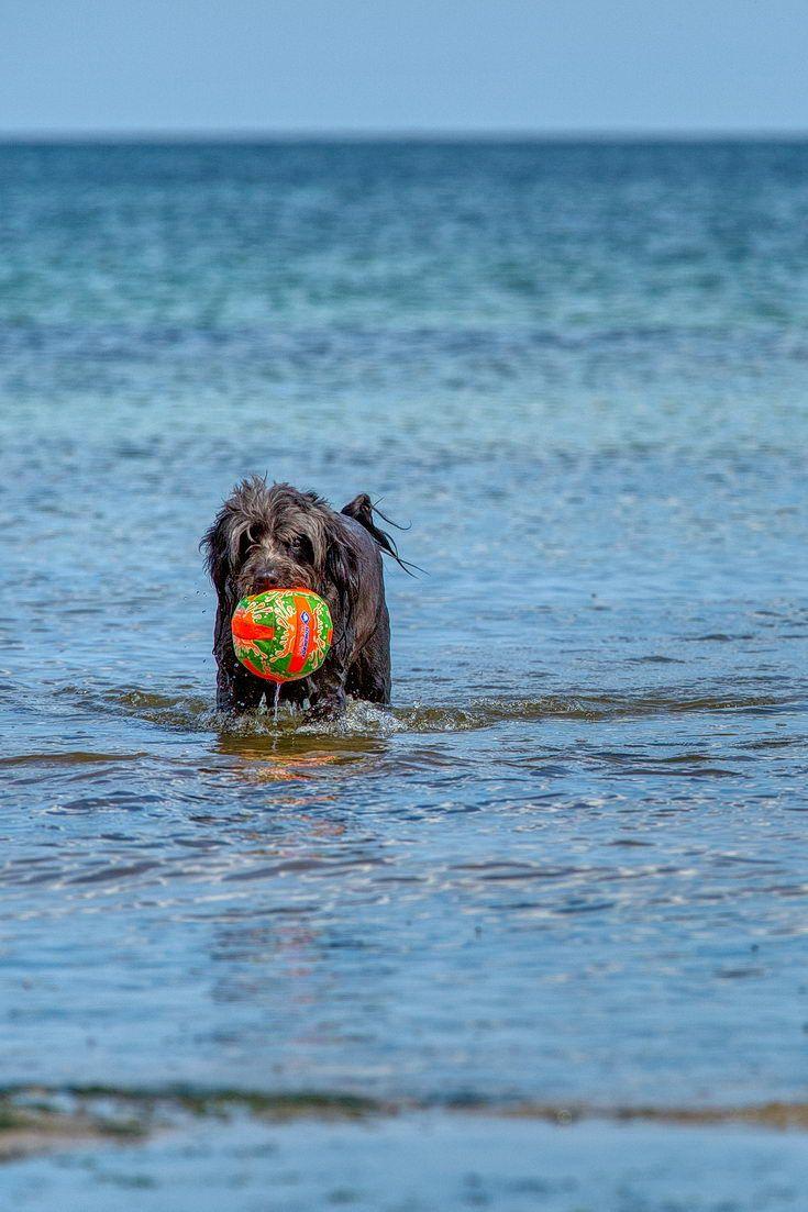 Urlaub mit Hund an der Ostsee Ferienwohnung in