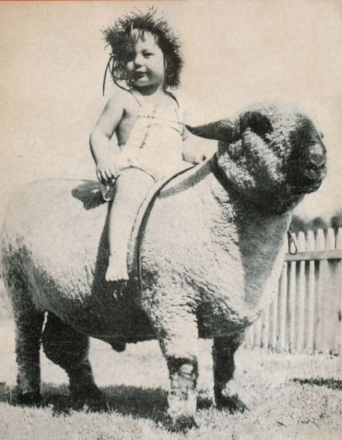 I never thought to ride our Shropshire ram when I was a child. (I wonder how long she stayed on?)