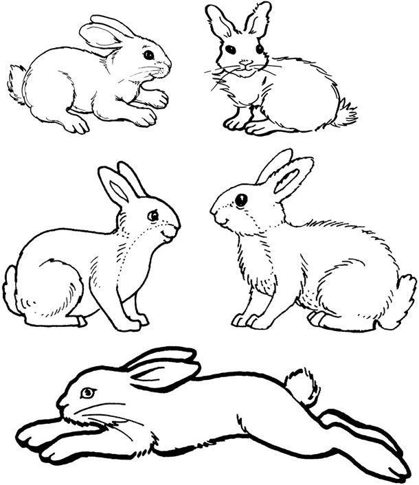 Printable Rabbit Coloring pages Bunny coloring pages