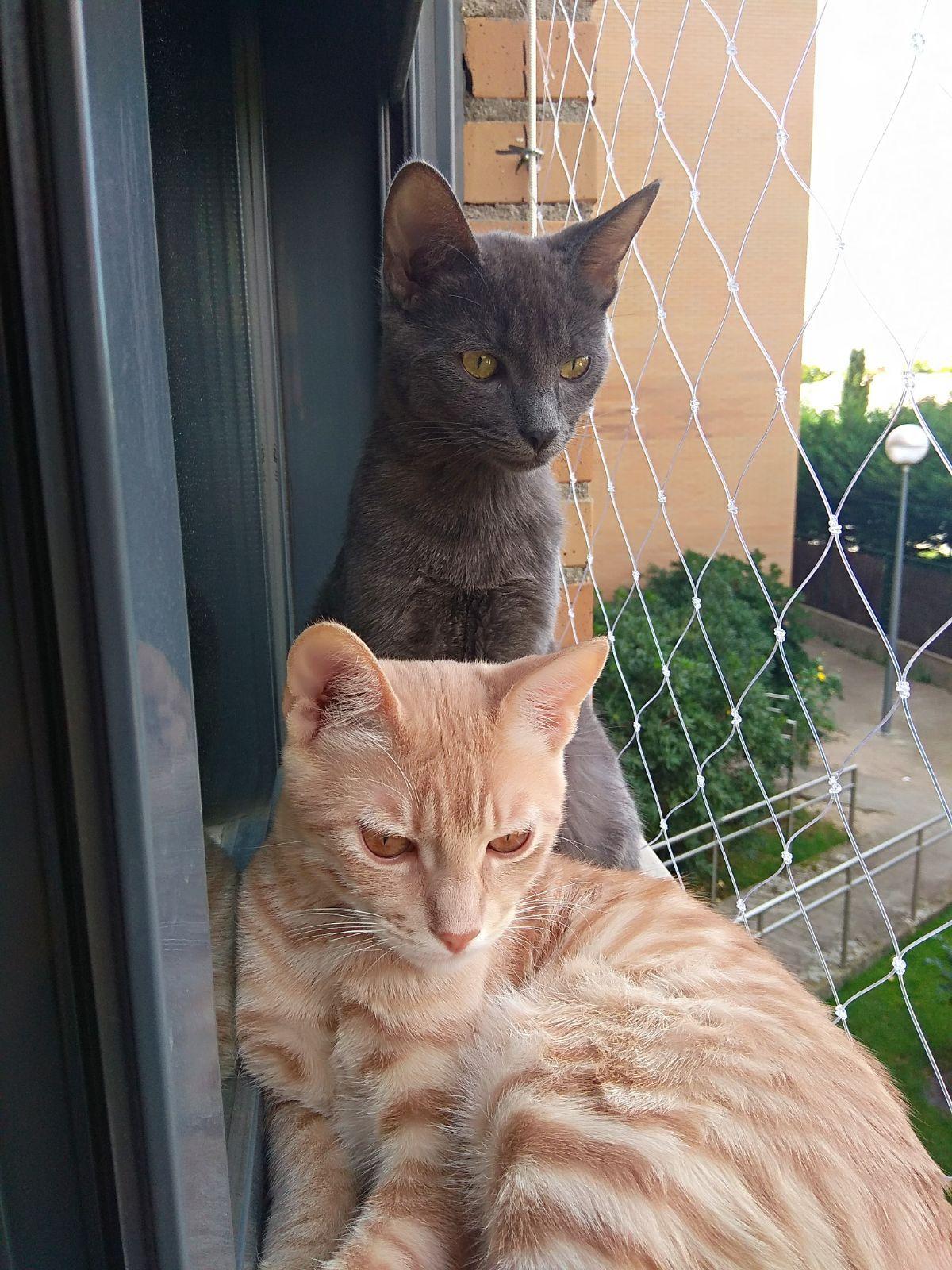 Redes De Seguridad Para Gatos Seguridad Anticaída Para Gatos Y Mascotas Mallas De Seguridad Gatos Mascotas Seguridad Para Ventanas