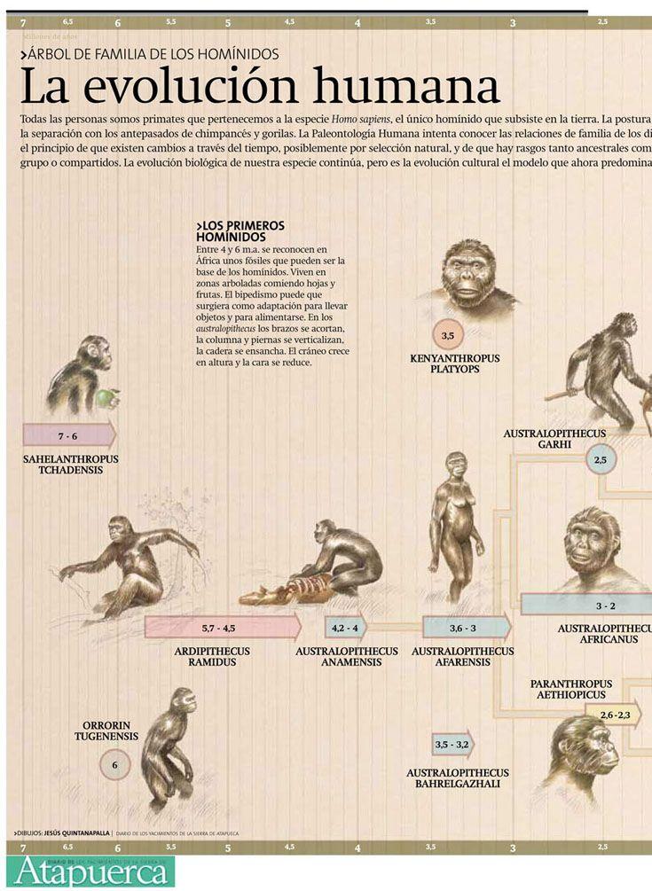 Evolución De La Especie Humana Evolución Del Hombre Evolución De Las Especies Evolucion Del Hombre Evolución Humana
