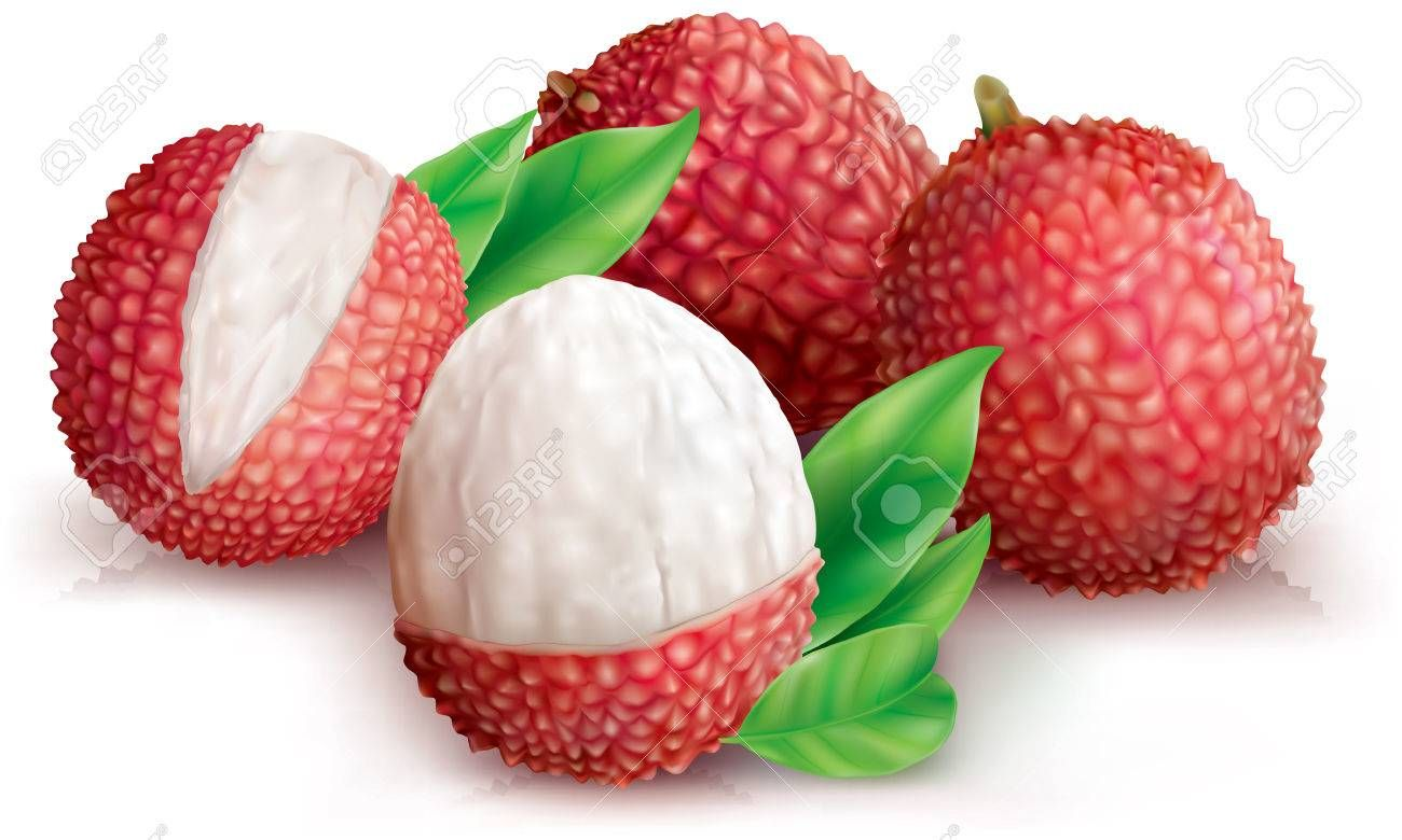 Lychees fruits and peeled lychee on white. Vector