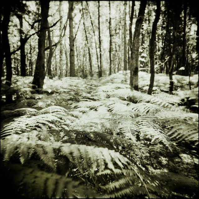 Photo by Isa Marcelli