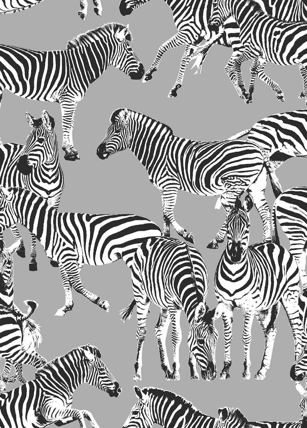 Vilber Zebras Mid Grey Wallpaper Main Image Zebra Wallpaper Animal Print Wallpaper Zebras