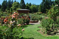 Gentil International Rose Test Garden | Portlandu0027s Rose Gardens And Rose Garden  Store