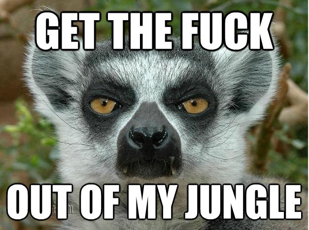 14602efc46f465a0f1e8cf70dde61361 lemur memes google search funnies pinterest lemur, memes