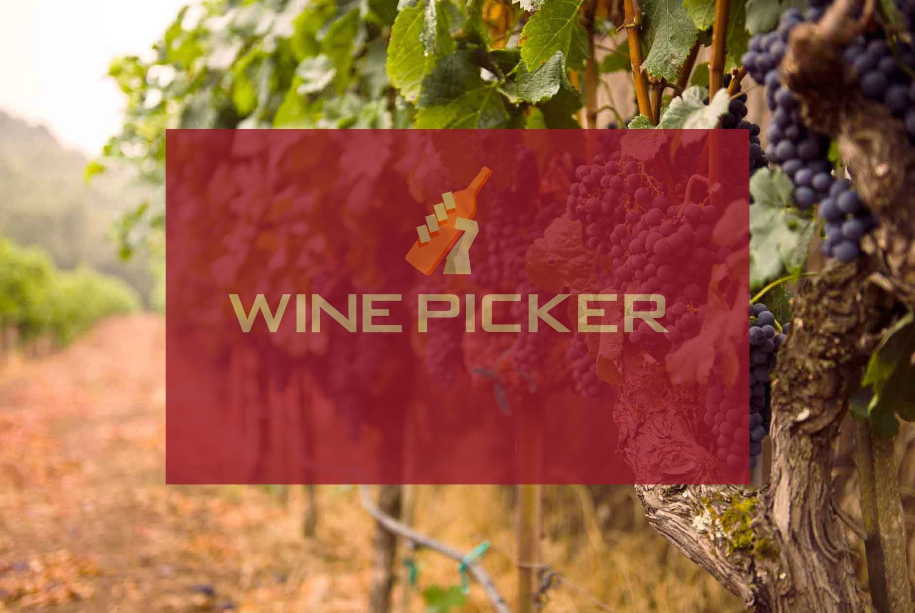Did You Know Struggling Vines Produce Better Wines Wine Cooler Wine App Wine Facts