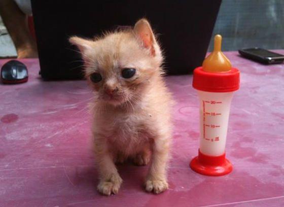 Tiny Afghan Rescue Kitten Golum Kitten Rescue Kittens Animal Charities