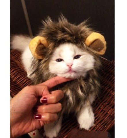 16 Best Pet Halloween Costume Winners For 2014: Funniest, Fiercest, Best Proof That Hello Kitty IS INDEED A Cat, & More...