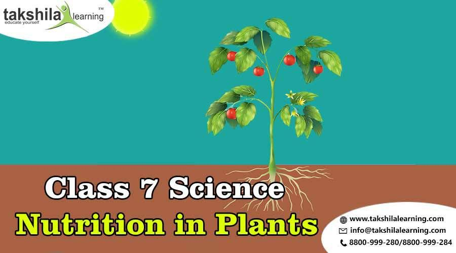 Online Notes For Cbse Class 7 Science Chapter 1 Nutrition In