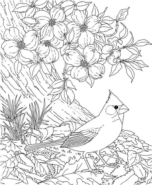 North Carolina Cardinal Coloring Page Purple Kitty Bird