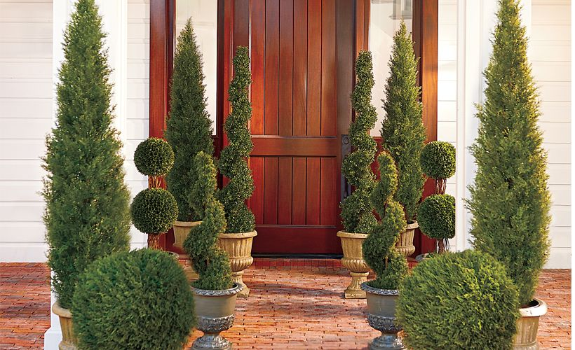 6 Tips To Selecting The Right Topiary Topiary Greenery And Gardens