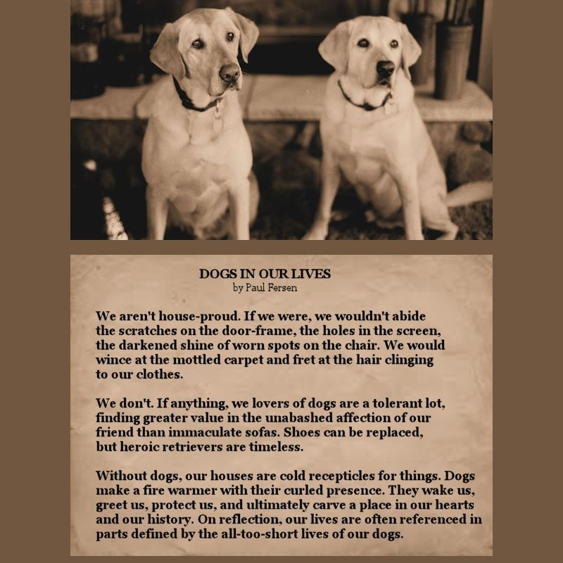 Dogs In Our Lives By Paul Fersen Dog Quotes Dogs Life