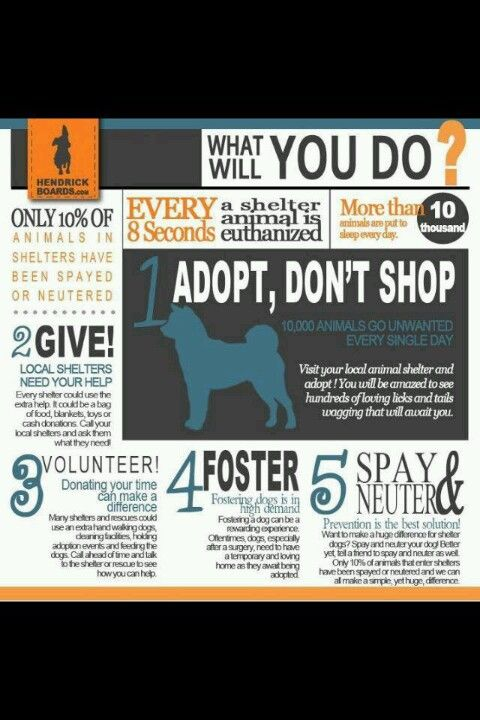 Adopt Don T Shop Humane Society Design Humane Society Dogs