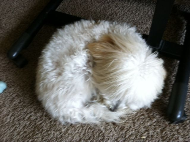 My Fur Ball