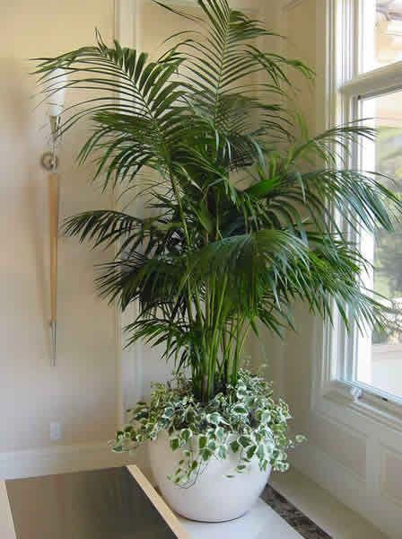 Plants That Absorb Moisture And Refresh The Air House Plants Decor Indoor Plants Artificial Plants Indoor