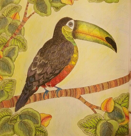 Toucan Animal Kingdom Color me draw me By Millie Marotta My