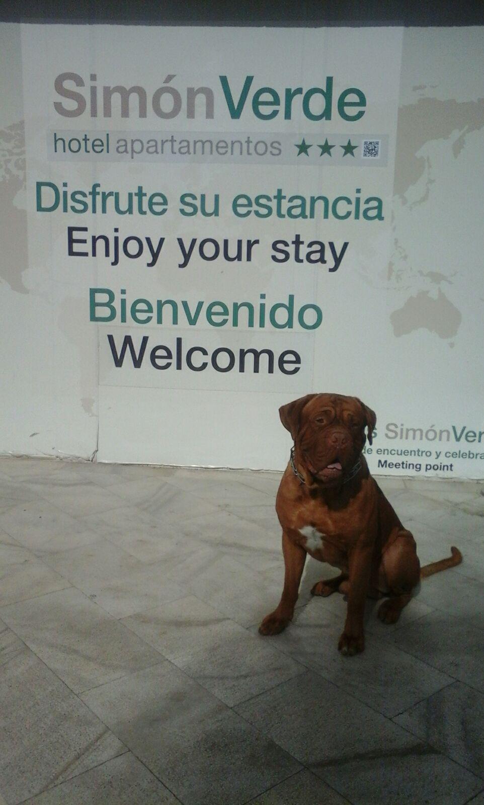 Apartamentos Simon Verde Viajar Con Perros Apartamentos Y Perros