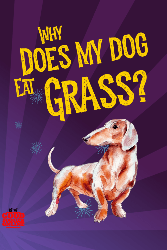 Why Does My Dog Eat Grass Find Out If Eating Grass Is Safe For Your Dog Or Is It A Sign That Your Dog Is Sick Dog Eating Good Doggies Online