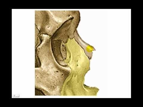 Huesos de la cara 1 | anatomia CRANEO | Pinterest | La cara, Huesos ...