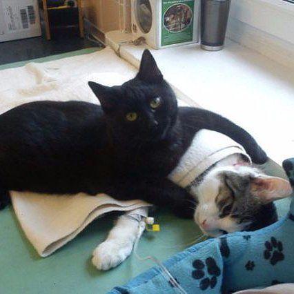 Nurse Kitty Will Make Everyone Feel Better Sick Pets Nurse Cat Sick Cat