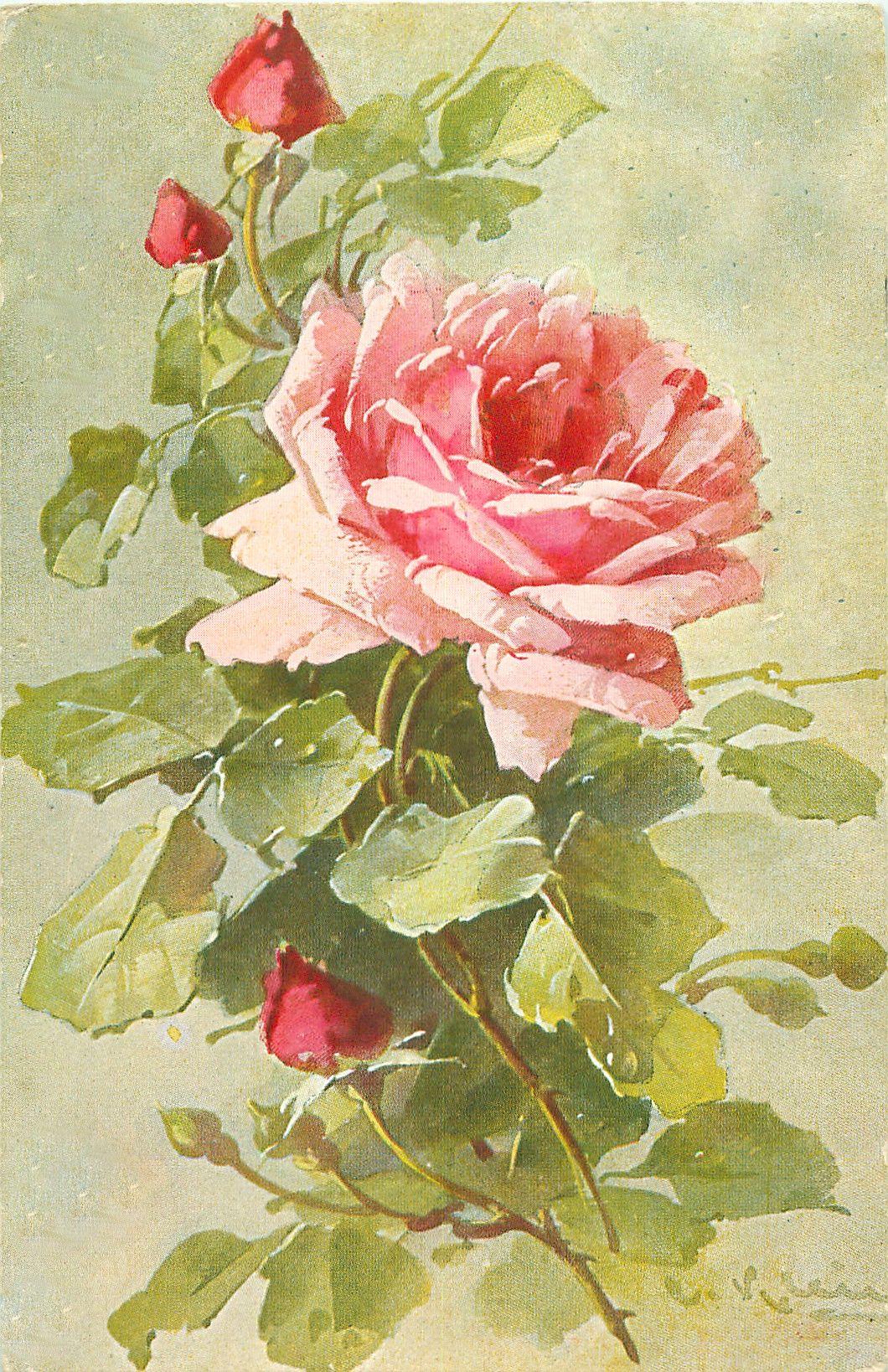 стоит разрезать старинные открытки розы выбирают самые