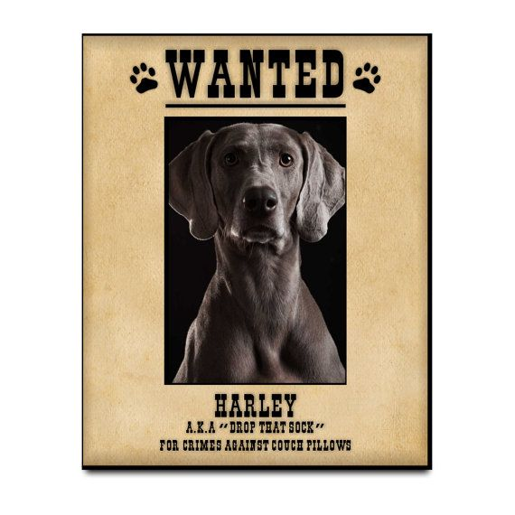 Personalized Pet Photo Frame Funny Wanted By Printsatthejunction